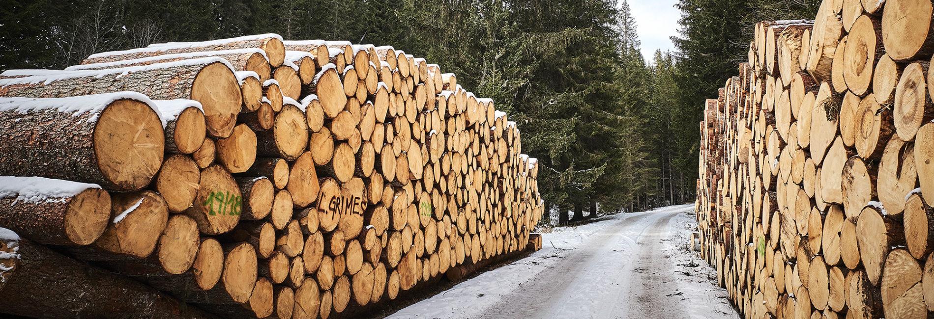 Bosco, legno