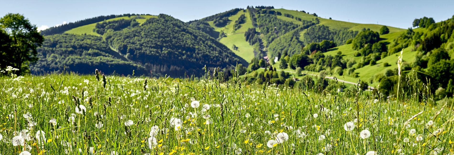 Rete Natura 2000 - Monte Baldo